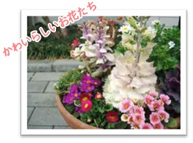 かわいらしいお花たち