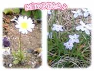 お庭に咲くかわいいお花♪