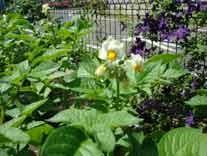 白い小さなお花